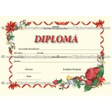Diploma D2 2017